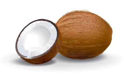 Coconut Producing Countries
