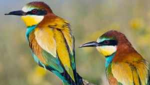 Top 5 Most Critically Endangered Birds on Earth