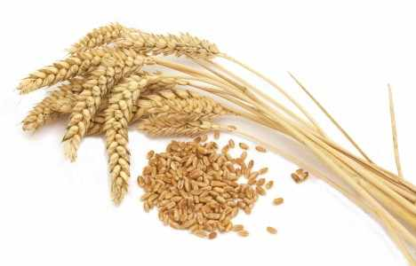 Top 5 Countries that Produce the Most Wheat