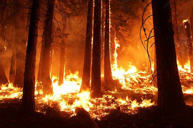 Top 5 Deadliest Forest Fires in Known History