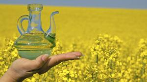 Top 5 Rapeseed Producing Countries
